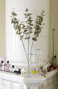 Eucalyptuskvistar i vas